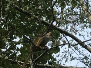 La Vallée des Singes -  The Valley of the Monkeys