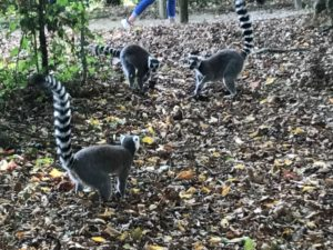 La Vallée des Singes -  The Valley of the Monkeys