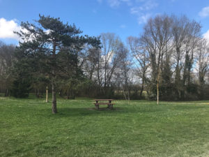 The-Perfect-Picnic-Spot---Plan-dEau-la-grande-la-prairie-